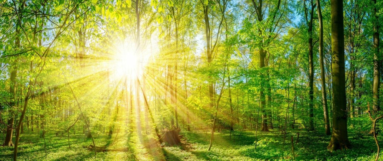ELKE KOUBA, der Wald als lebendige Seele
